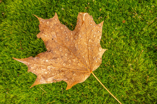 """""""Wet leaf on moss covered rock"""""""