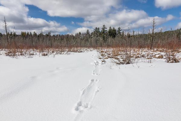 """""""Otter Tracks, Superior National Forest"""""""