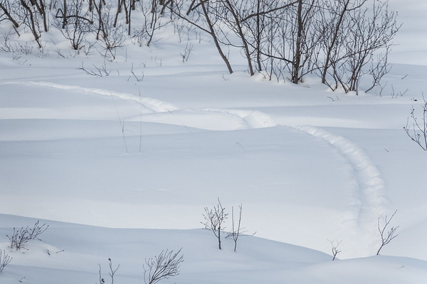 """Otter tracks in deep snow..."""
