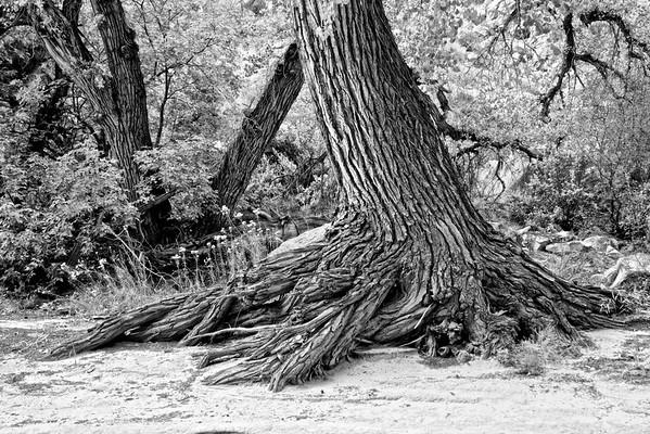 Sturdy Roots