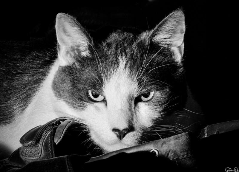 Reggie | Mom's Evil Cat.