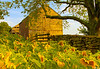 Buttonwood Barn | Another version of the barn