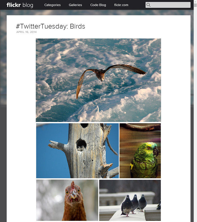 #TwitterTuesday: Bird