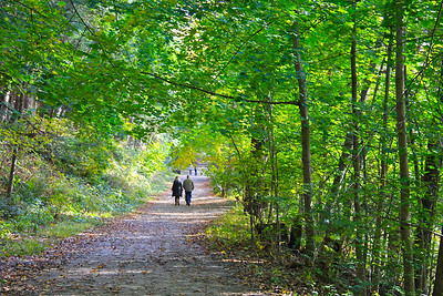Walking in the Woods on an Autumn Morning
