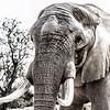 7 _Elefant,_Reserve_Africaine_de_Sigean,_France
