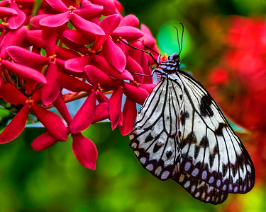 Key West Butterfly & Nature Conservatory - May /June 2016 Display
