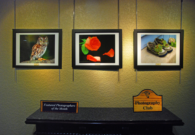 Featured Photographers - July/August 2011<br /> Pete Stein - Owl<br /> Bruce Smith - The Rose<br /> Stan Serota - Shoe Plantings