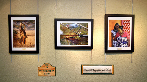 Featured Photographers - June/July 2011 Arthur Schreibman - I'll Keep You Safe Sharon Galvin - Little Green Heron Jerry Greenfield -