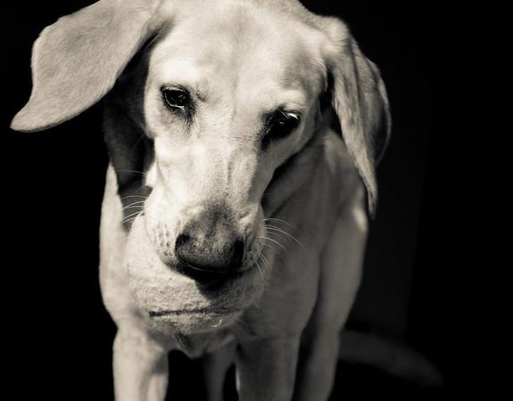 Fetch Please?