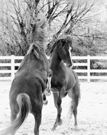 Rumblin Stallions.