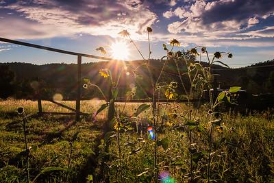 Wildflower Sunset