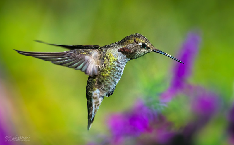 Angel Wings Hummingbird