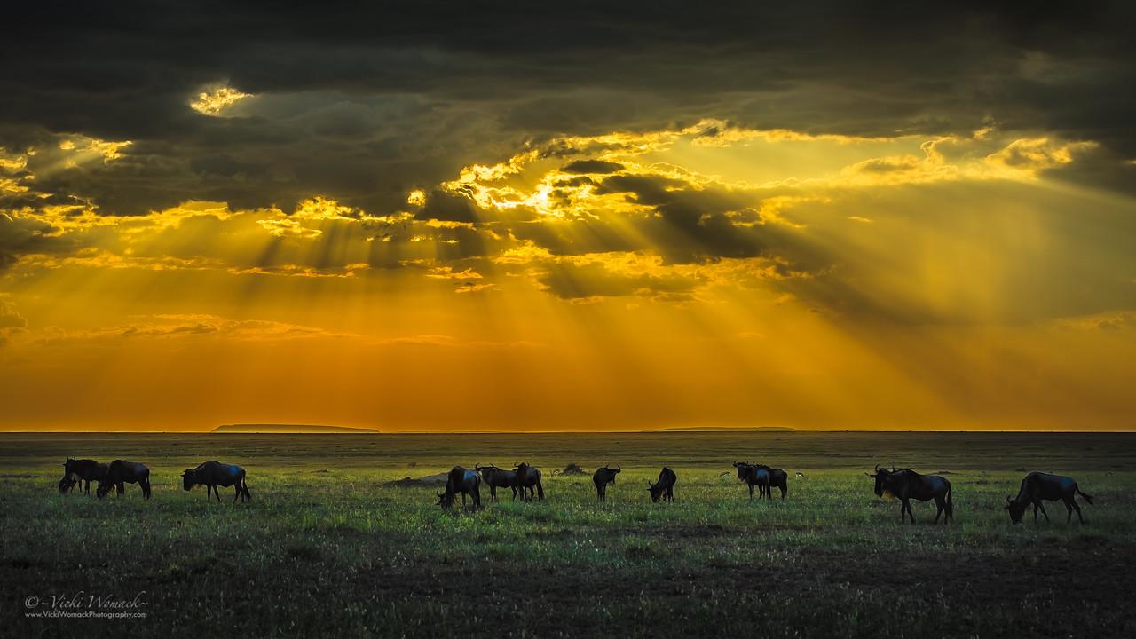African Wildebeest Magic