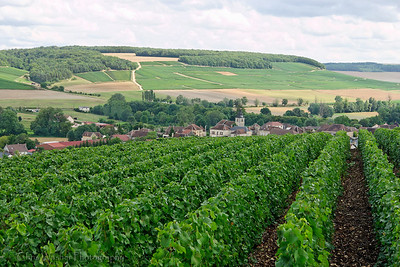 Grape vines over a village in Champagne.  All Champagne grapes are grown on the sides of low hills.