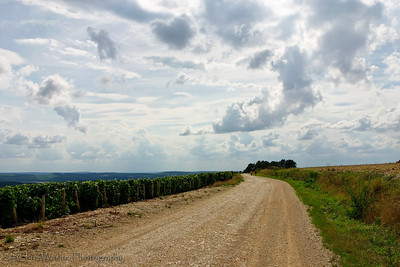 Long gravel road through the vineyard with an active sky.