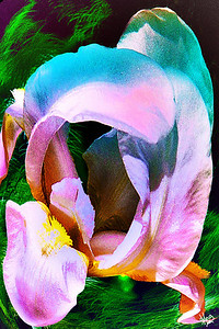 Iris Gradient