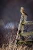 Owls-0458