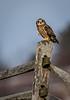 Owls-0378