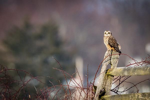 Owls-0523