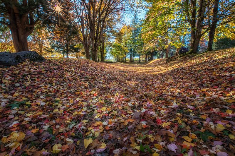 Fall Carpet of Leaves EJ Roberts Park Landscape View Sunstar