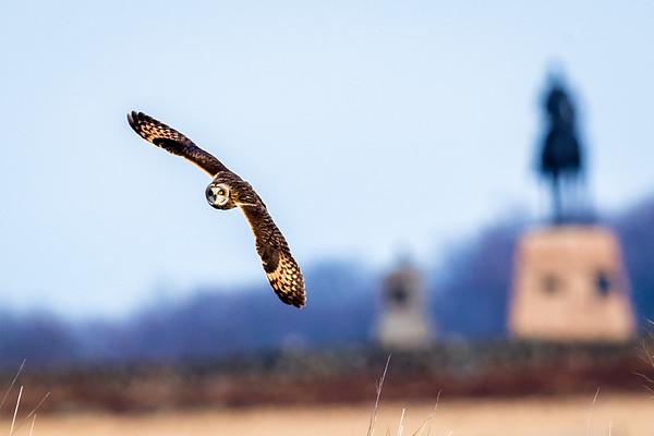 Owls-0449-Edit