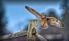 Owls-0270-Edit