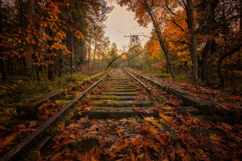 Old Mill RR Tracks Fall Leaves