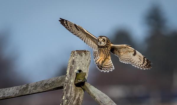 Owls-0270