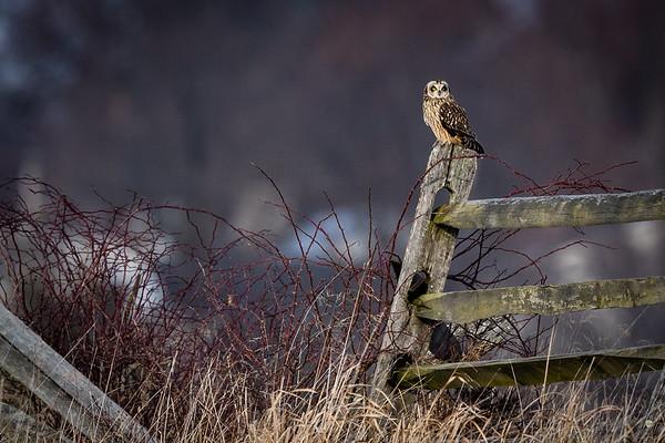 Owls-0456