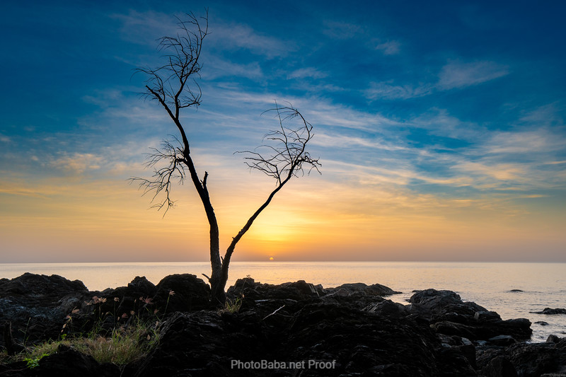 A Timeless Tree by the Ocean Watching the Sun Rise