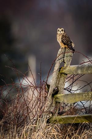 Owls-0522