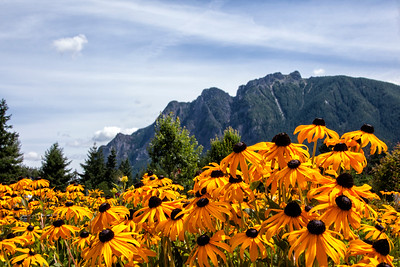 Mt Si From Downtown North Bend WA Flowers Foreground Landscape View