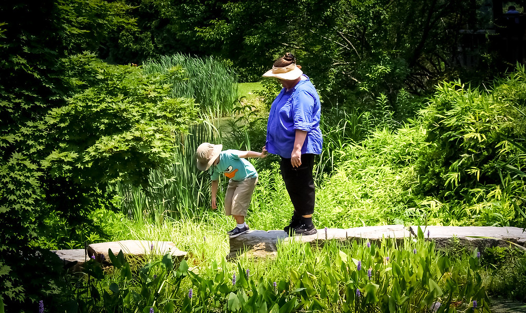Walk along a stepping stone path at Brookside gardens
