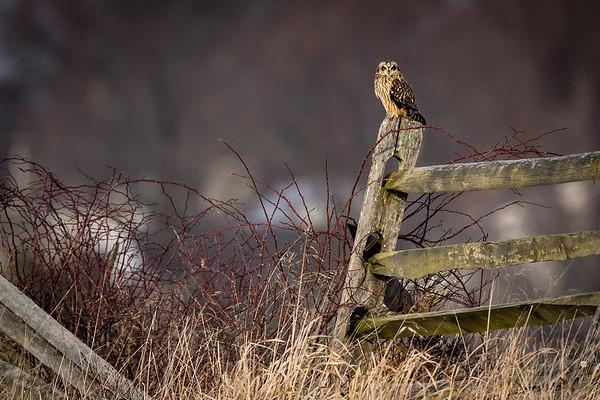 Owls-0463