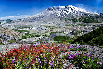 Mount St Helens Wildflowers Foreground 7-9-11