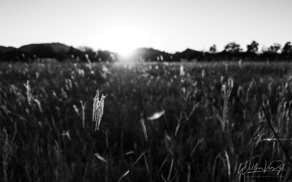 20200801 Sunset through the Grass, Bethulie, Free State
