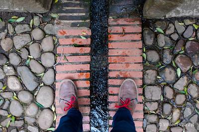 20201114 Walk in Kirstenbosch Botanical Gardens, Western Cape