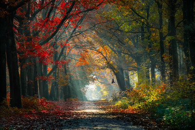 Morning Blessings | Beautiful Enlighted Colorful Forest Path Star of Sunlight Bird Trees Leaves Maashorst Natuurfotografie