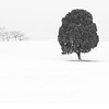 Lonely Tree and friends ~