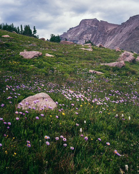 Wild Basin Wild Flowers - July
