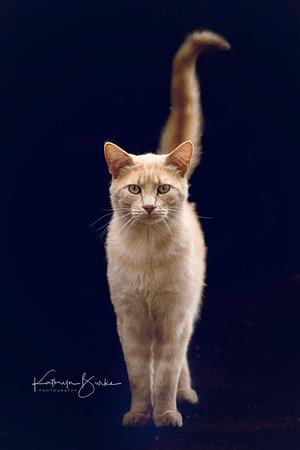 Kitty Ockendon, Bromont