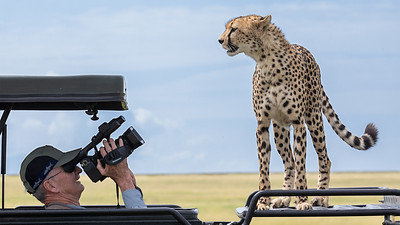 Close Encounter with a Cheetah