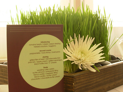 Sweetheart table had a square wooden box with a flat of wheatgrass surrounded by black river rocks and a single bloom of white spider chrysanthemum