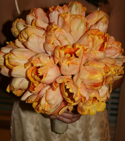 bridesmaid's bouquet of 3 dozen peach parrot tulips w/ivory grosgrain ribbon wrap