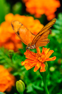20070519 Krohn Butterflies 062