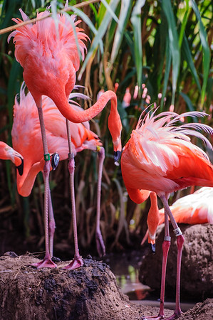 20080712 Abq Gardens and Zoo 080