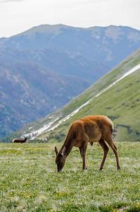 20110710 Rocky Mt NP 078