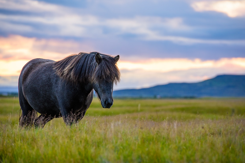 20180824-31 Iceland 459
