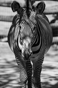 20070421 Cincinnati Zoo 105