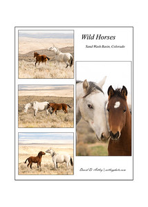Wild Horses, Sand Wash Basin, Colorado, Compilation
